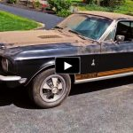 classic_shelby_mustang_survivor_cars